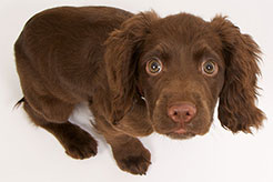 Puppy Separation Anxiety: Symptoms, Causes, Prevention, and Treatment - thumbnail