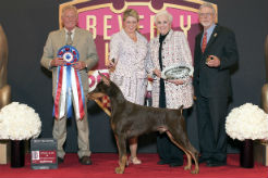 Beverly Hills Dog Show Presented by Purina Showcases Top Honors for Purina Pro Plan-Fed Dogs - thumbnail