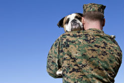 Service Dogs for Heroes: Providing the Perfect Partners for Veterans
