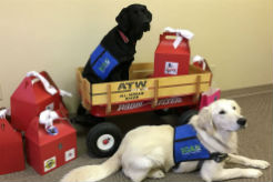 Indiana Service Dogs Deliver 650 Valentine's Day Gift Boxes