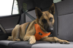 When You Buckle Up This Summer, Don't Forget About Your Dog - thumbnail