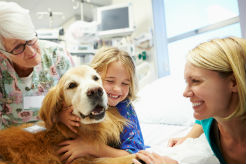 Therapy Dog Training Tips - Part 1 - American Kennel Club