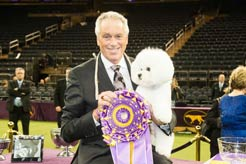 Flynn the Bichon Frise Wins 2018 Westminster Best in Show