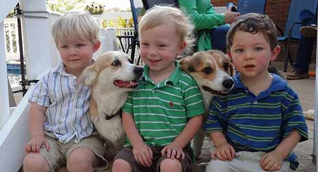 corgis with kids