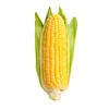 Can Dogs Eat Corn Off The Cob