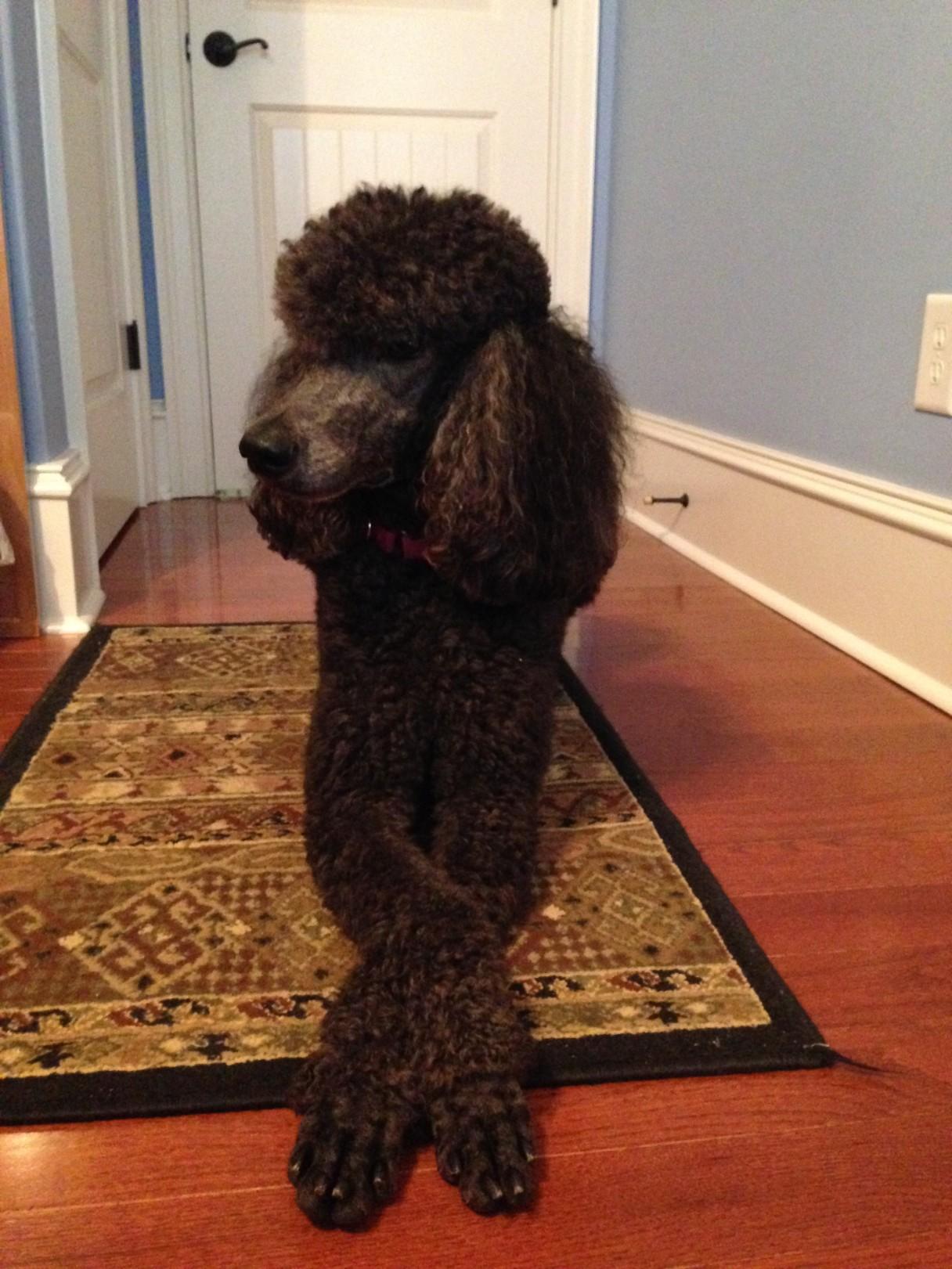 Dog crossing legs