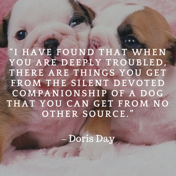 Day dog quote
