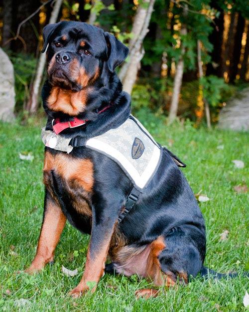 Dieter service dog