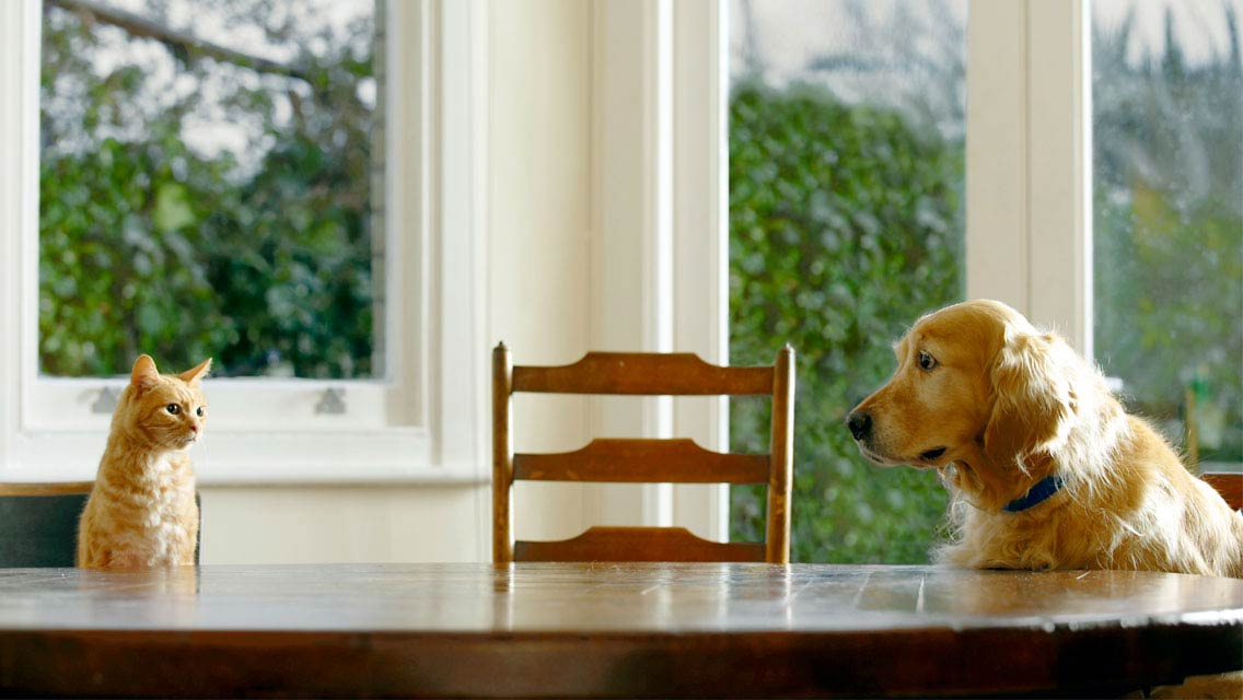 Rencontre entre chien et chat