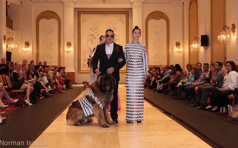 Chintimini Kennel Club Akc Dog Show