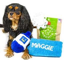 Hanukkah Dog Gift Pack