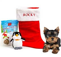 Christmas Dog Gift Pack