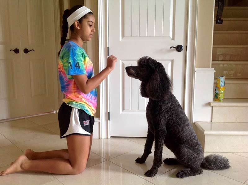 dog saying yes