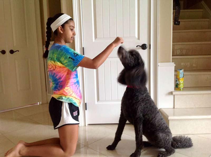 dog saying no
