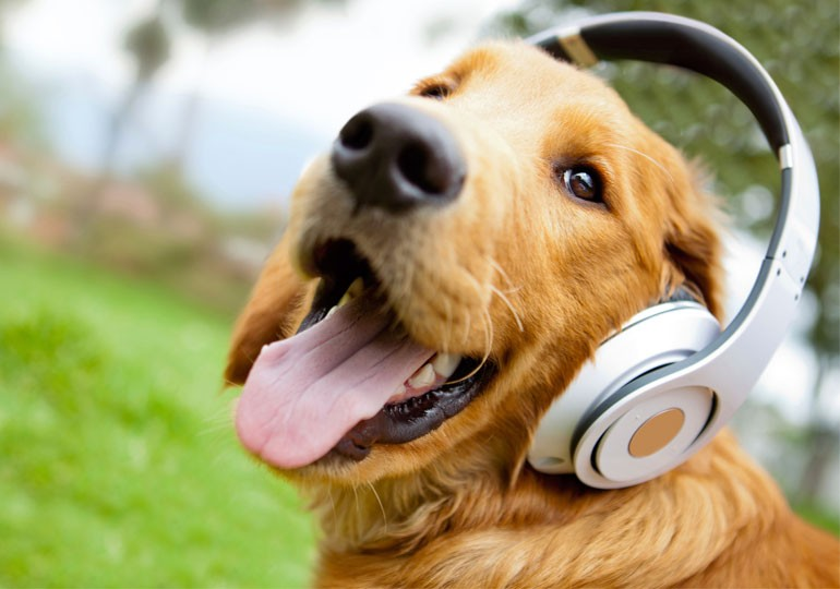 Do Dogs Like Listening to Music?