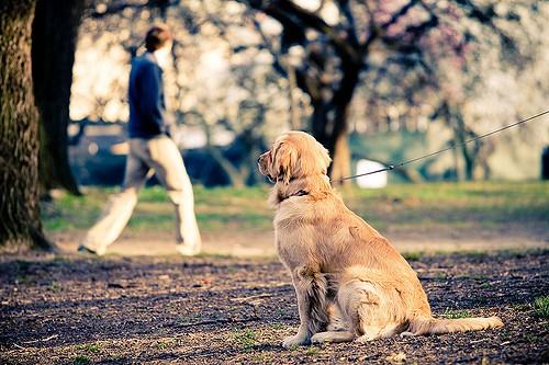 Dog in Central Park