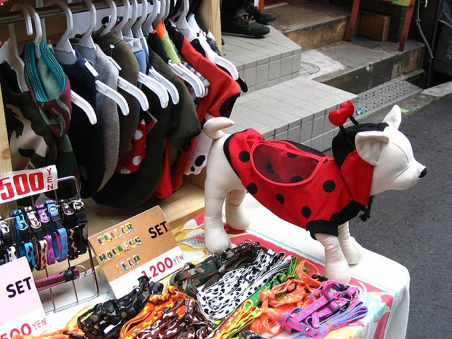 Dog clothing shopping