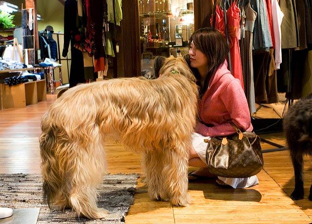 dog.shopping2