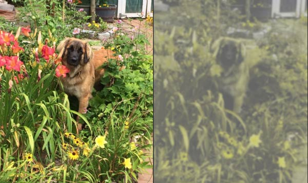 dog in garden, dog view, human view