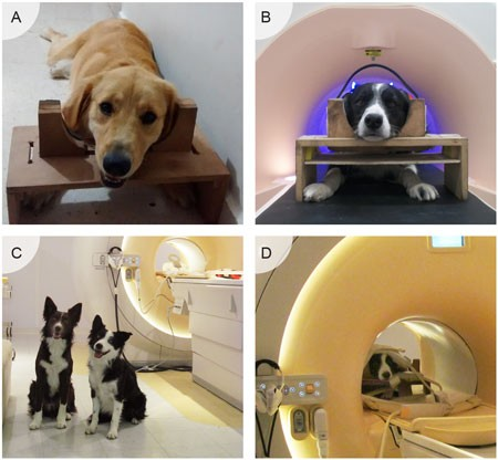 Dogs Getting MRIs