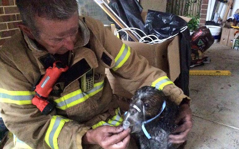 Image Of Firefighter Saving Dog With Oxygen Mask Goes Viral