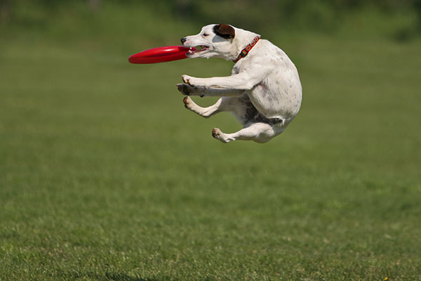 Catching a frisbee