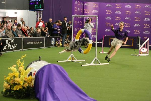Holster WKC agility