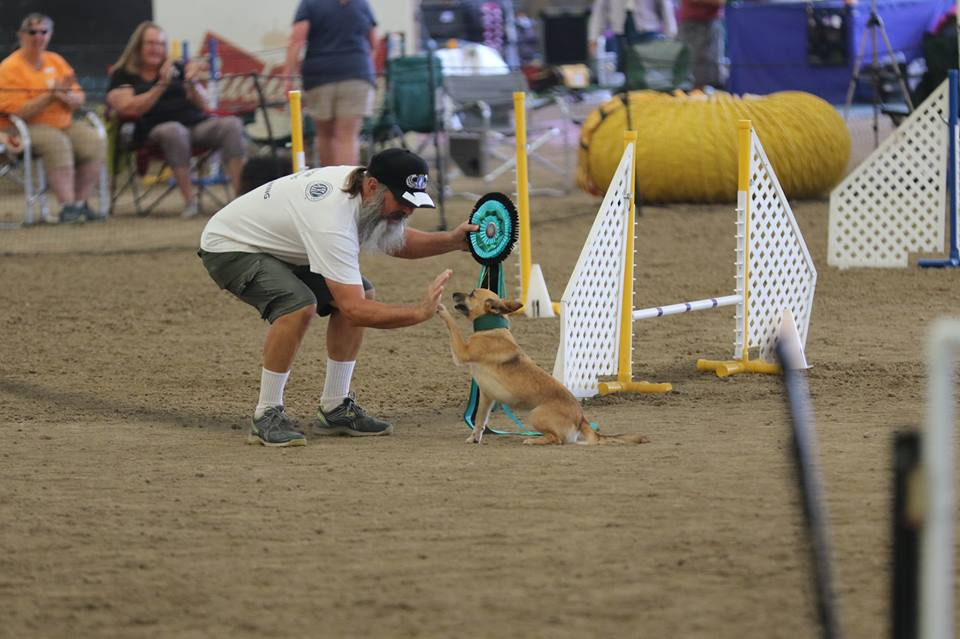 Scared Little Shelter Dog Becomes Agility Champion