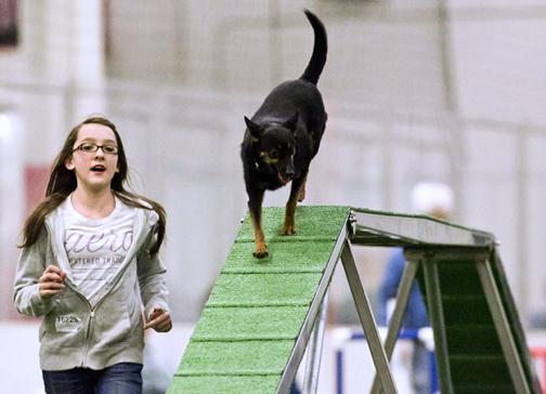 Becoming A Junior Dog Handler American Kennel Club