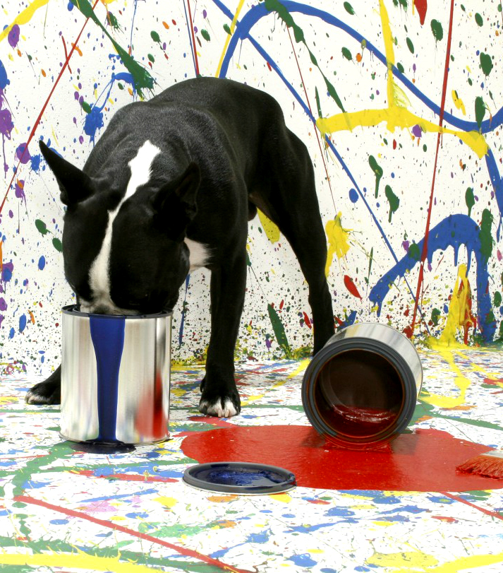 Dog playing in paint