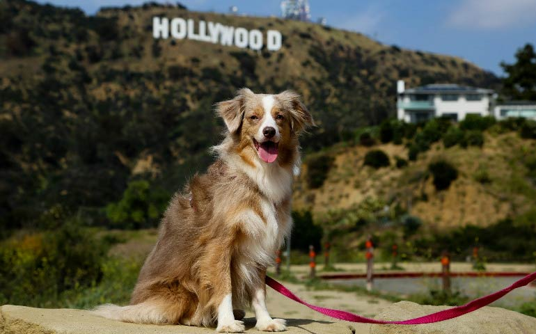 7 fun things to do with your dog in los angeles american for Dog kennels los angeles