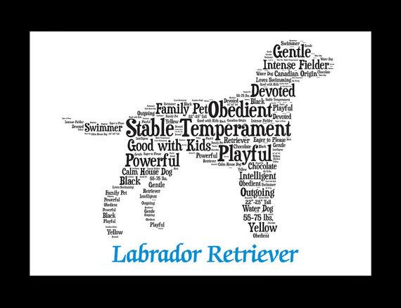 Lab breed qualities art