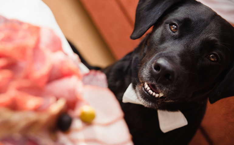 This Behavior Problem Set Labrador Retriever Owners Back $38K