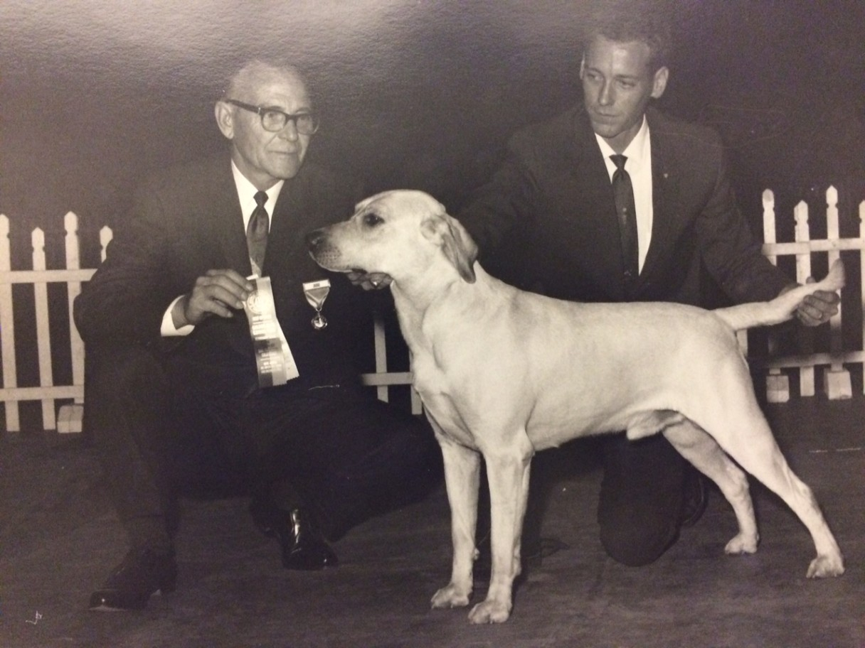 Lab dog 1968 winner