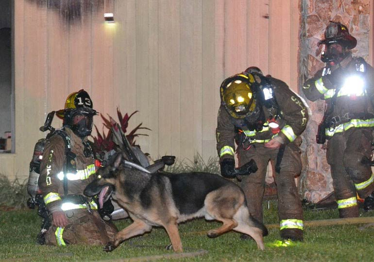 German Shepherd Leads Firefighters to Children in Burning Home