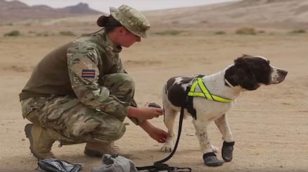See A British Military Dog Gear Up For