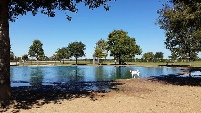 millie_bush_dogpark
