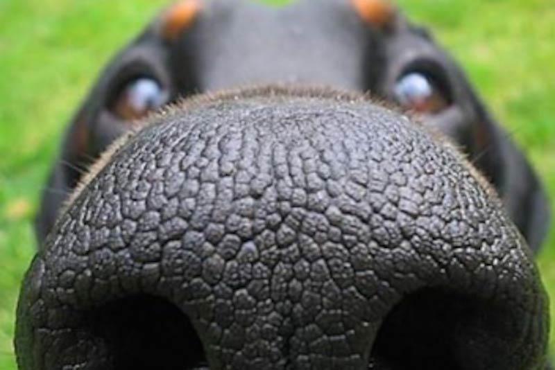Nosy dogs