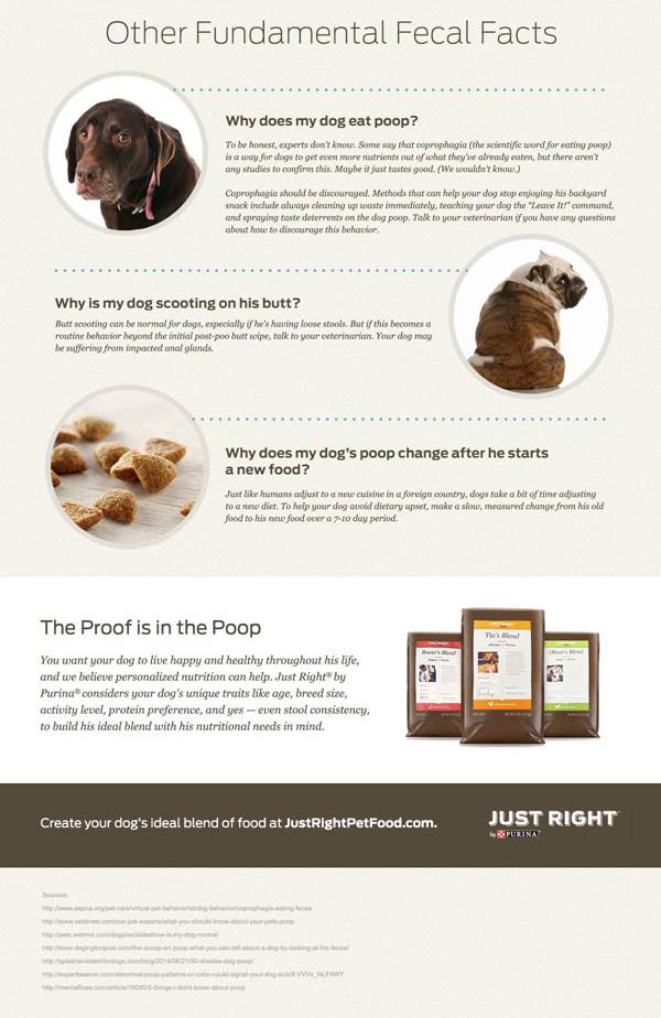 What Your Dogs Poop Says About His Health