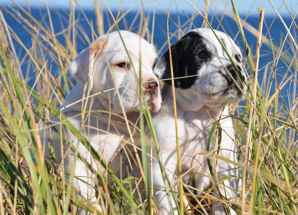 puppies seagrass