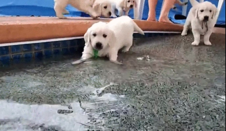 Puppies learning to swim