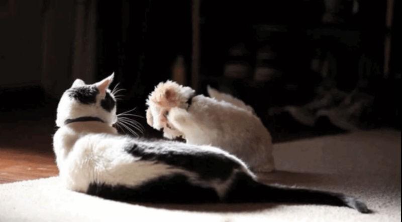 Puppies meeting kittens