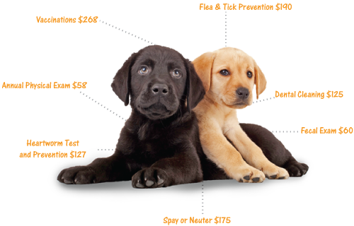 Your Puppy's First Vet Visit - What To Expect. How much will the first year cost.