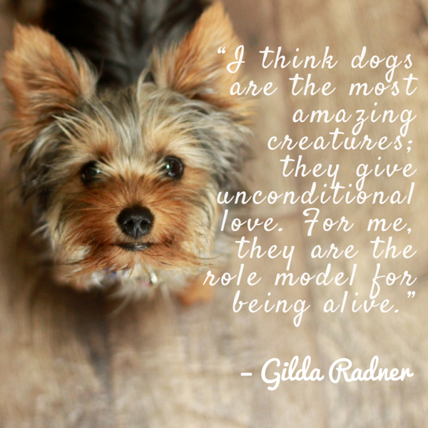 Dog Quotes We Rounded Up The Best Of The Best Cool Quotes About Dogs Love