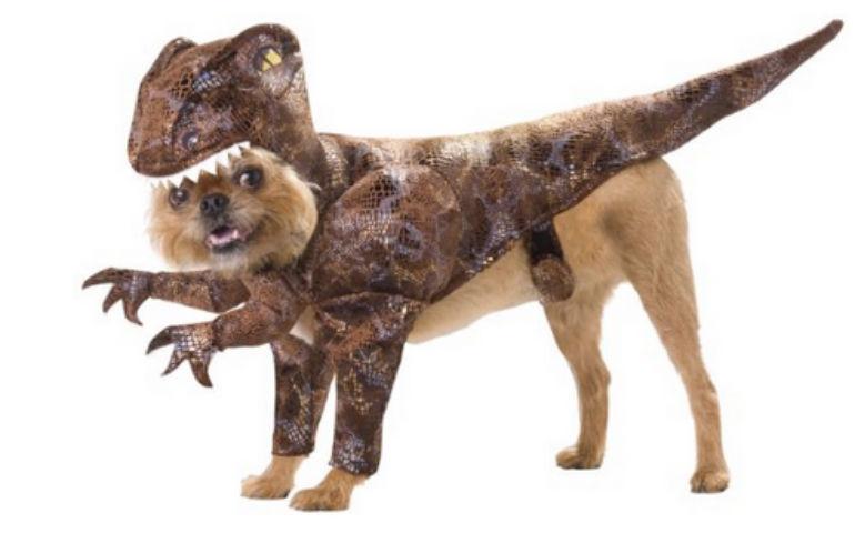 dog dressed as raptor