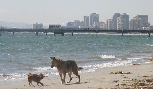 rosie_s_dog_beach