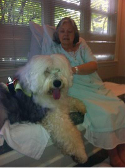 Hospice visit Sheepdog