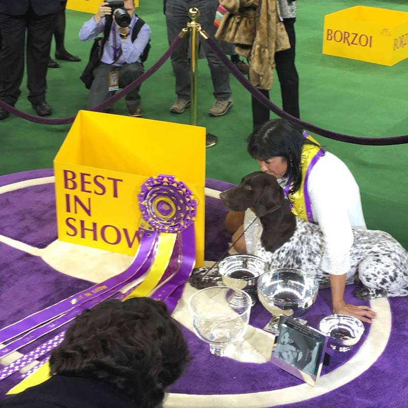 2016 westminster best in show