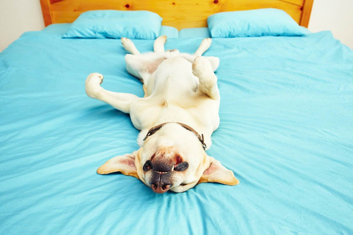 Where Do Dogs Sleep at Night? – American Kennel Club