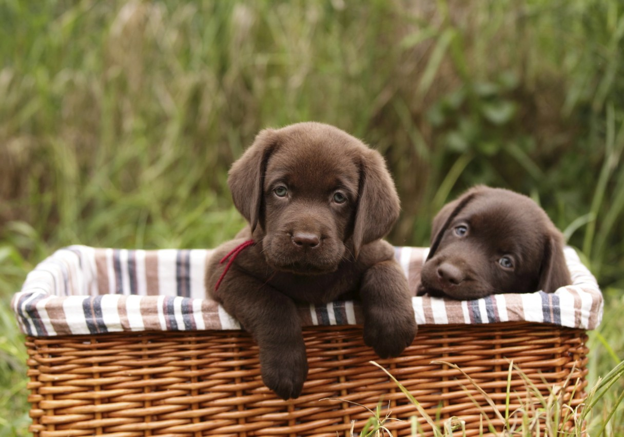 Most Popular Dog Breeds In America – Did Your Dog Make The List? 2 ...
